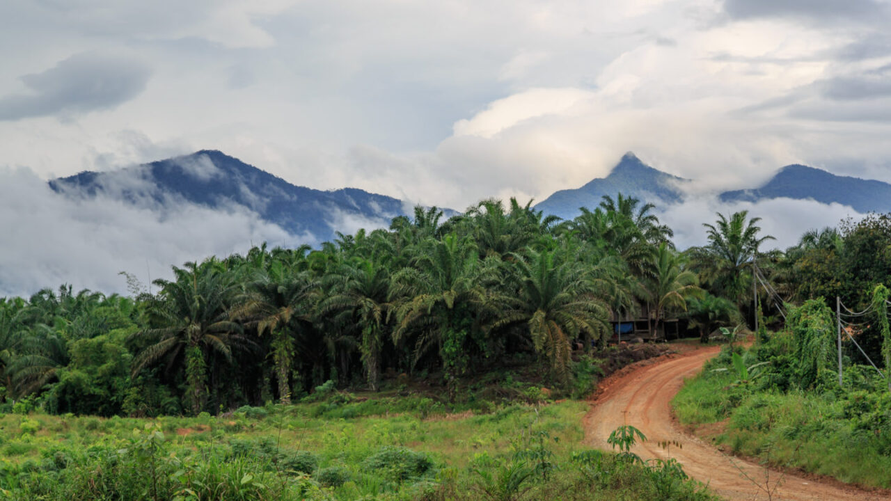 Why you should avoid products containing palm oil (and lists of products to avoid)