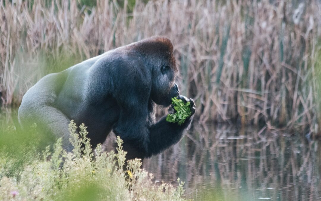David Attenborough's new documentary is surprisingly radical