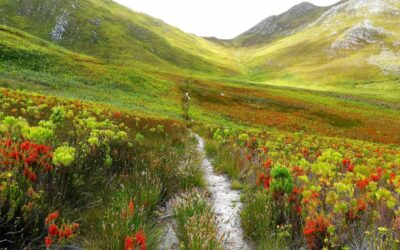 Slow down on this Western Cape slackpacking trail