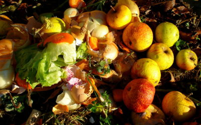 Tips: How (and why) to Compost