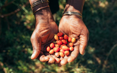 Indigenous plants make up the growing organic beauty industry