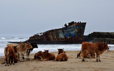 How a new discovery shows that cows could help solve the plastic pollution crisis